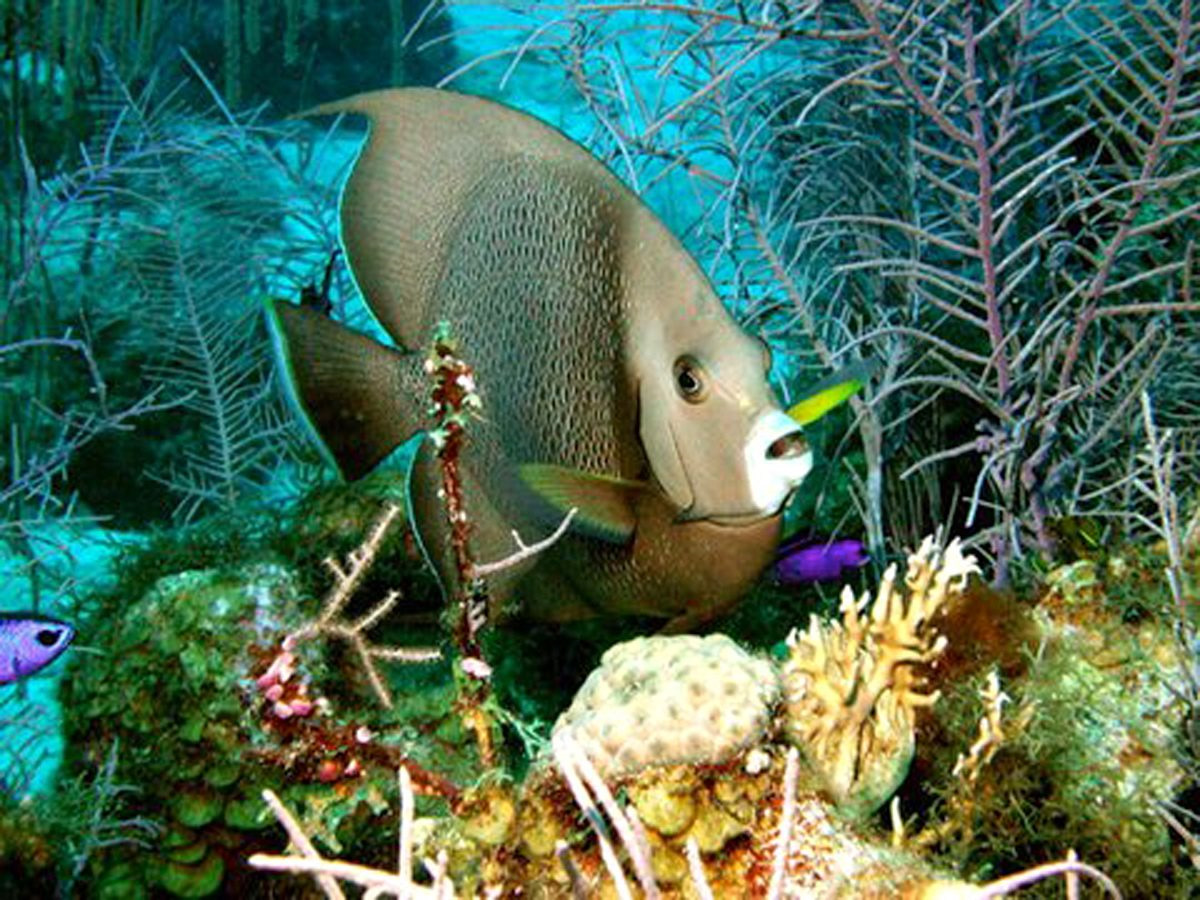Scuba Diving and Snorkeling